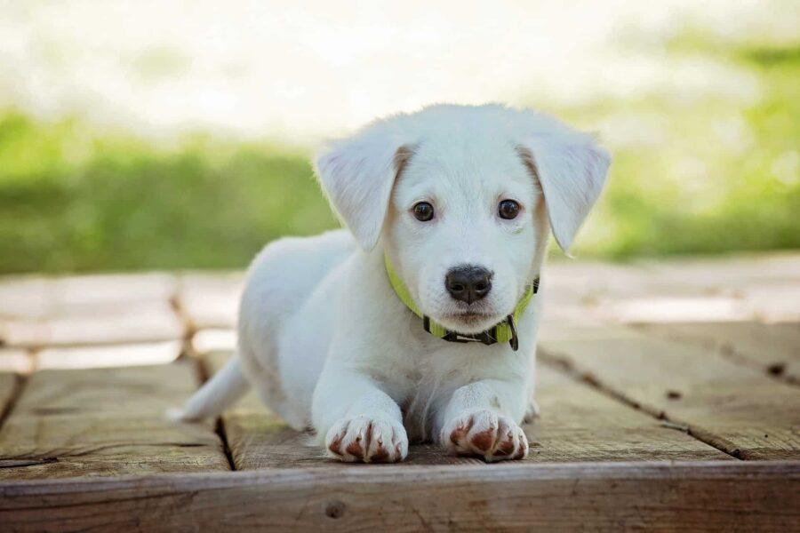 cucciolo di cane in giardino