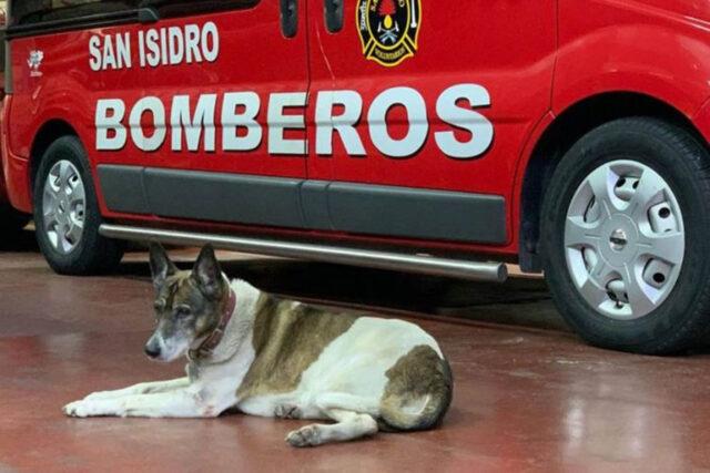 cane sdraiato in caserma dei pompieri