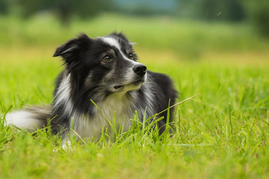 cane che guarda verso una direzione