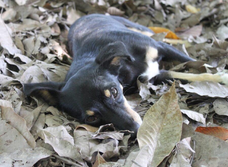 cane disteso su tappeto di foglie
