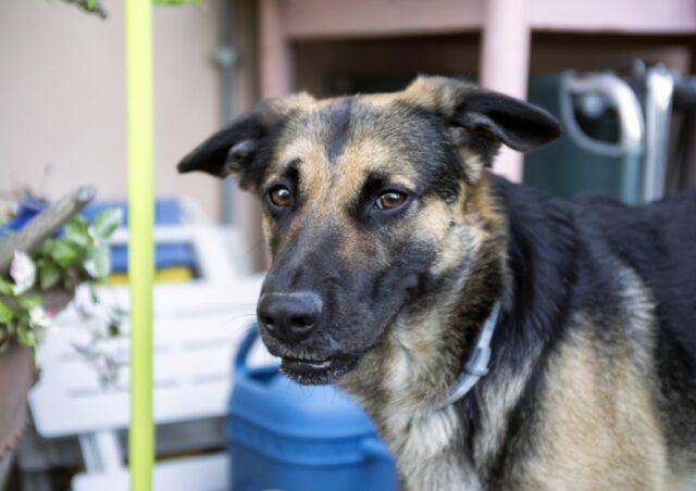 cane adottato fugge via paura