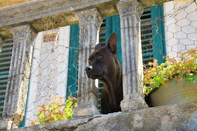 cane nero alla finestra
