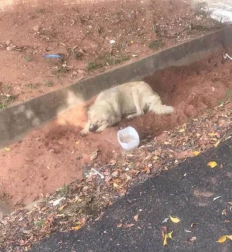 cane sdraiato nella terra