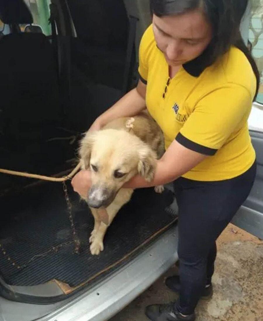 cane con soccorritori