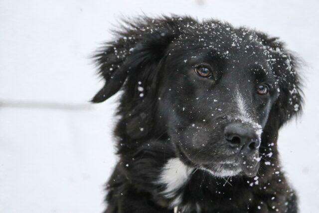 cane nero nella neve