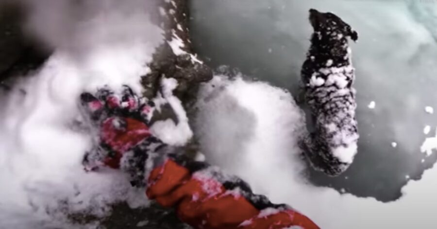 tecnico soccorso alpino salva un cane in pericolo