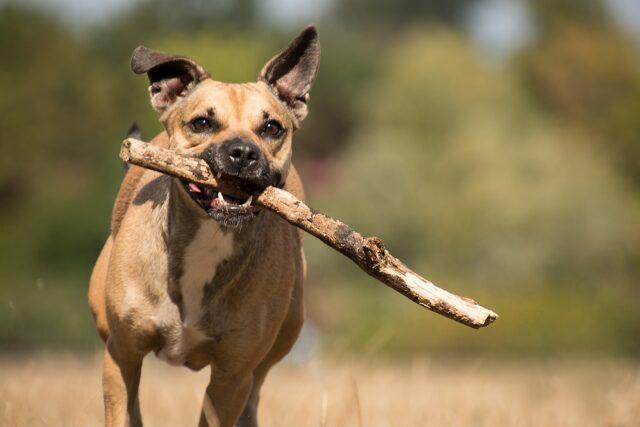 cane corre con bastone