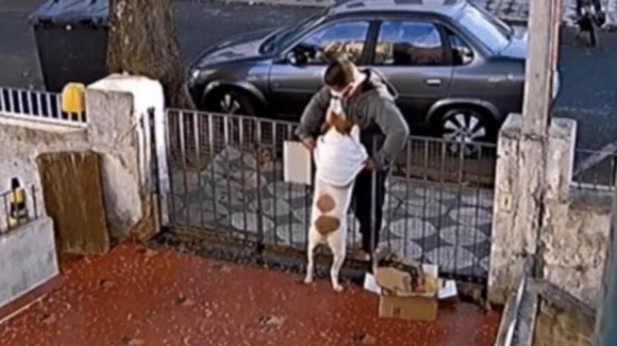 passante deruba cane