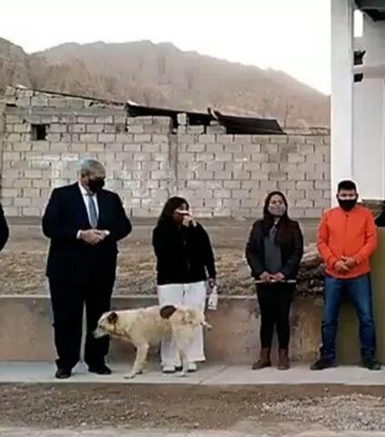 cane urina sui piedi di una donna