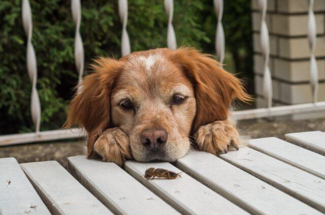 cane guarda un grillo sul tavolo