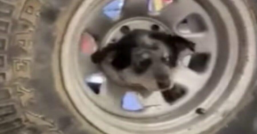 cane meticcio con testa in un pneumatico