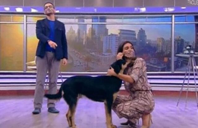 cane in studio televisivo