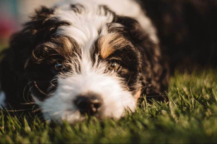 cane disteso in giardino