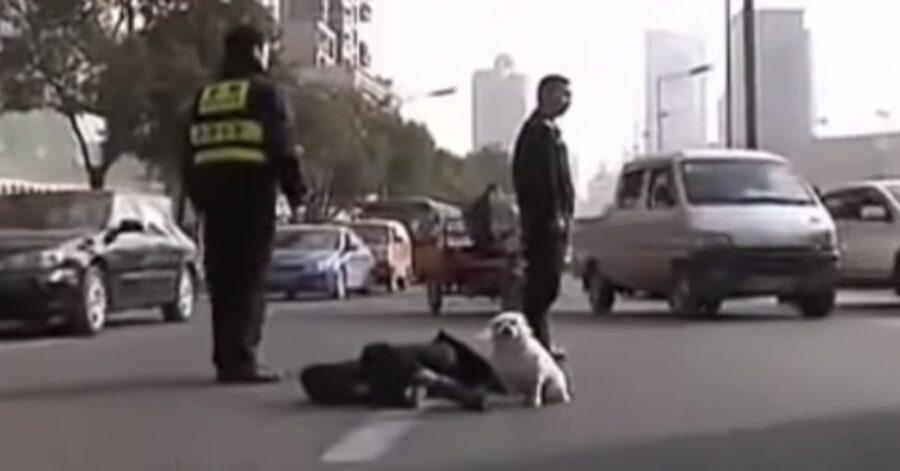 cane non lascia il padrone deceduto in strada