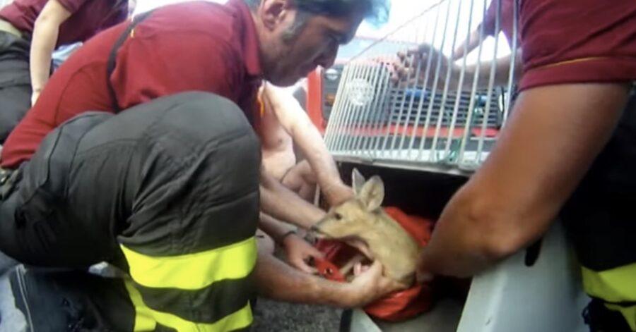pompieri con un cerbiatto salvato
