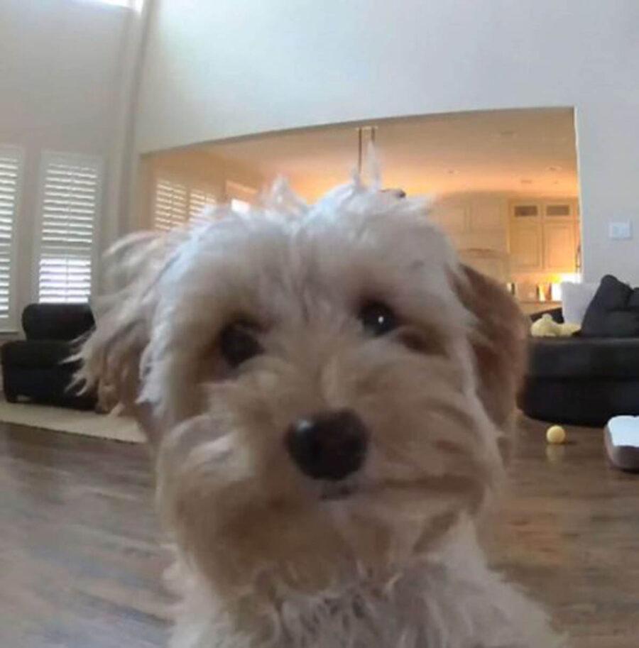 cane davanti telecamera