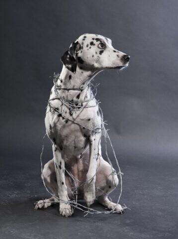 cane con un filo spinato attorno