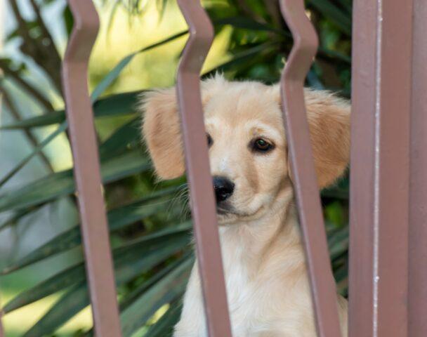 cane bianco dietro ad un cancelletto