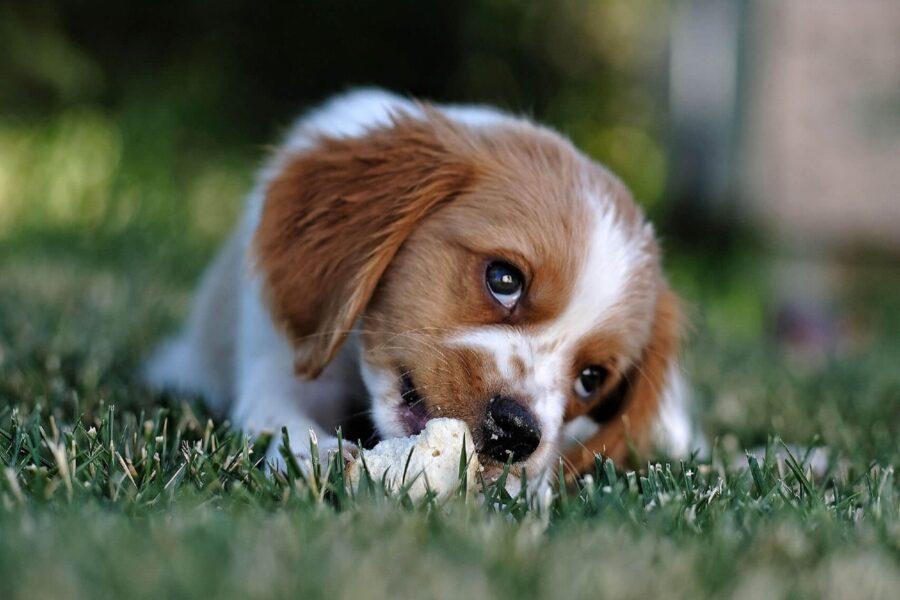 cane che mangia pane