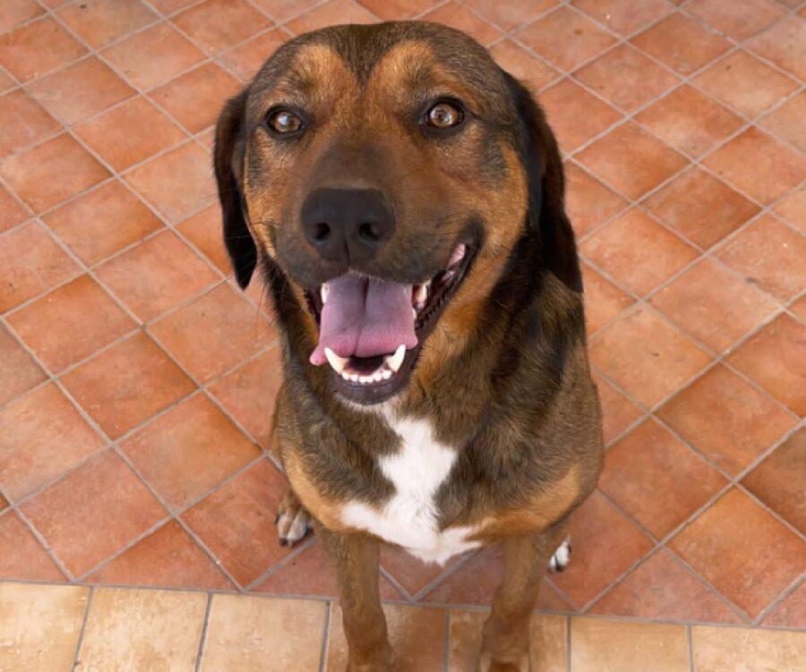 cane meticcio reggie sorridente