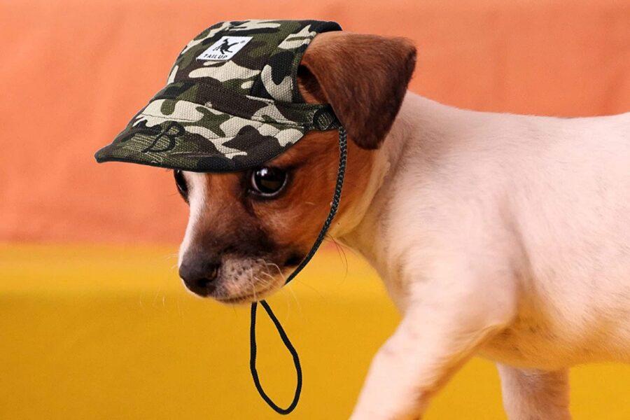 cane con il cappellino