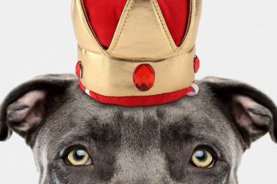 cane con cappellino buffo