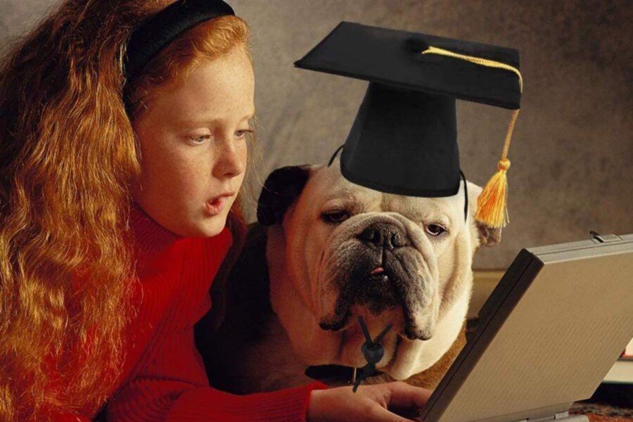 cane laureando