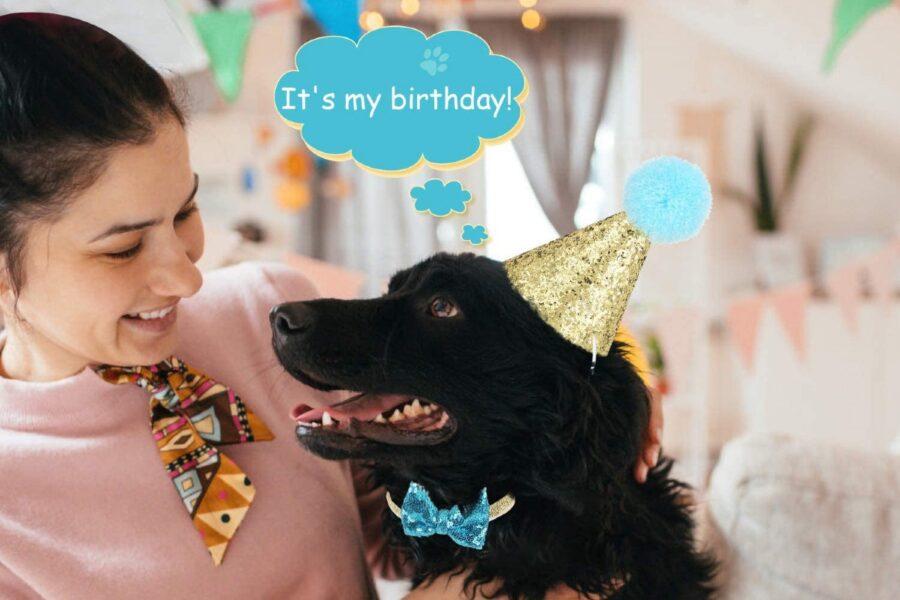 cane festeggia il compleanno