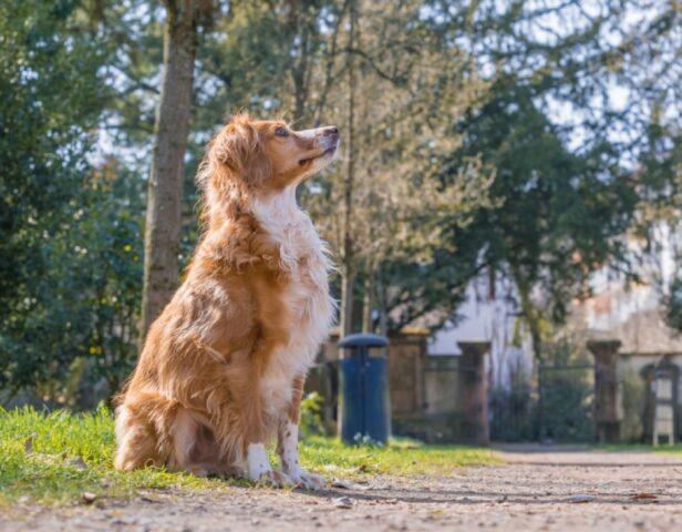cagnolino di 16 anni scappa via