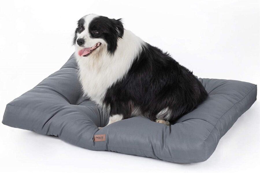 cuscinone per il cane