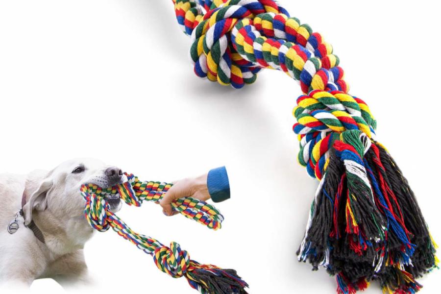 corda per cani