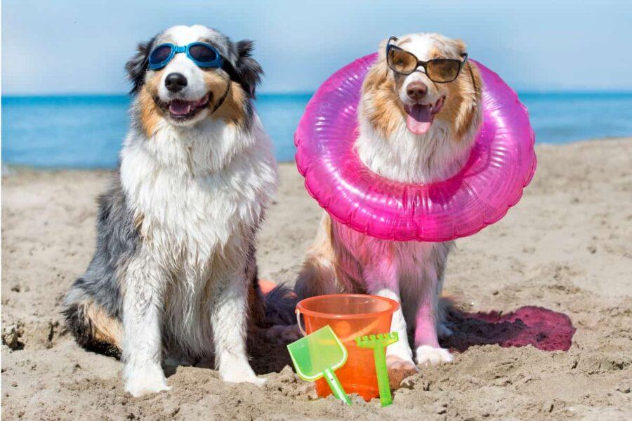 cani con accessori da spiaggia