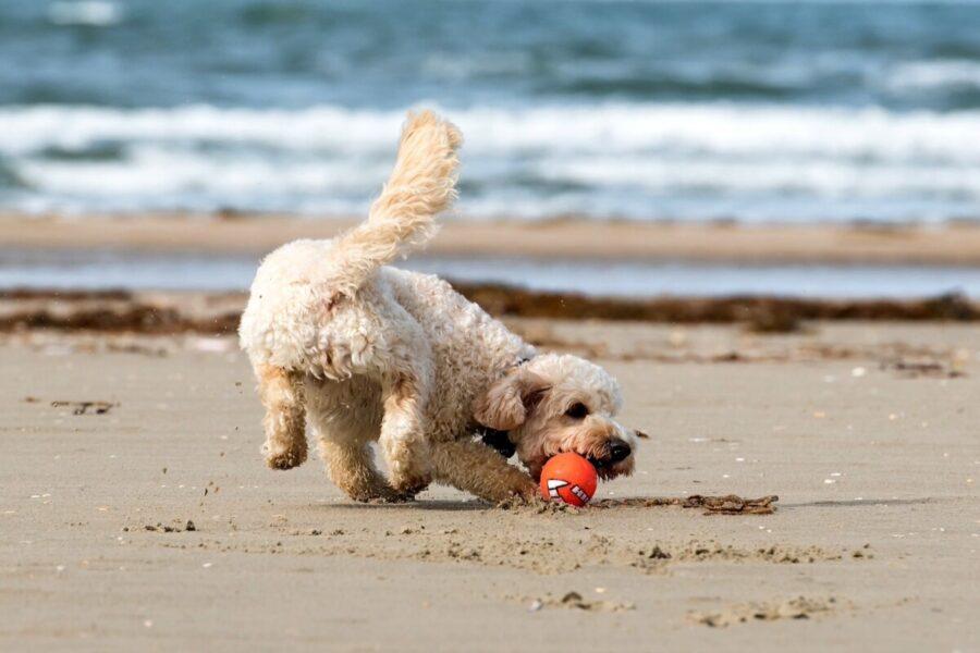 cane rincorre pallina al mare