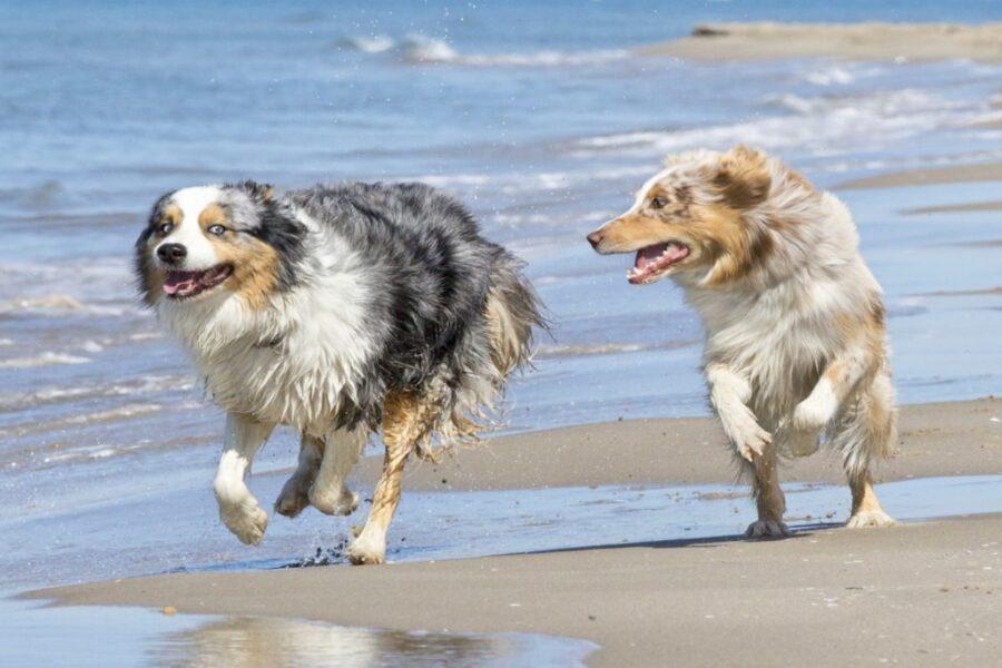 cani corrono in riva al mare