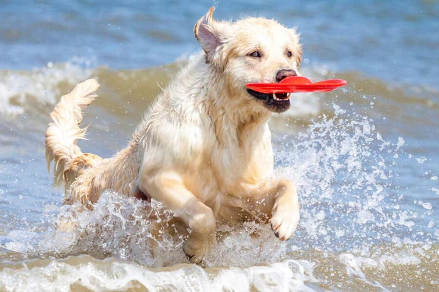 cane gioca al mare