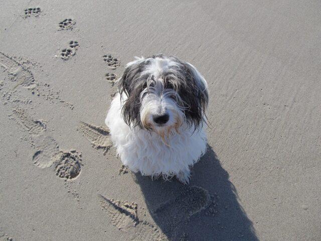 cane al mare si rinfresca