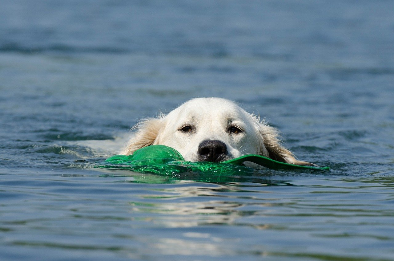 cane nuota in mare