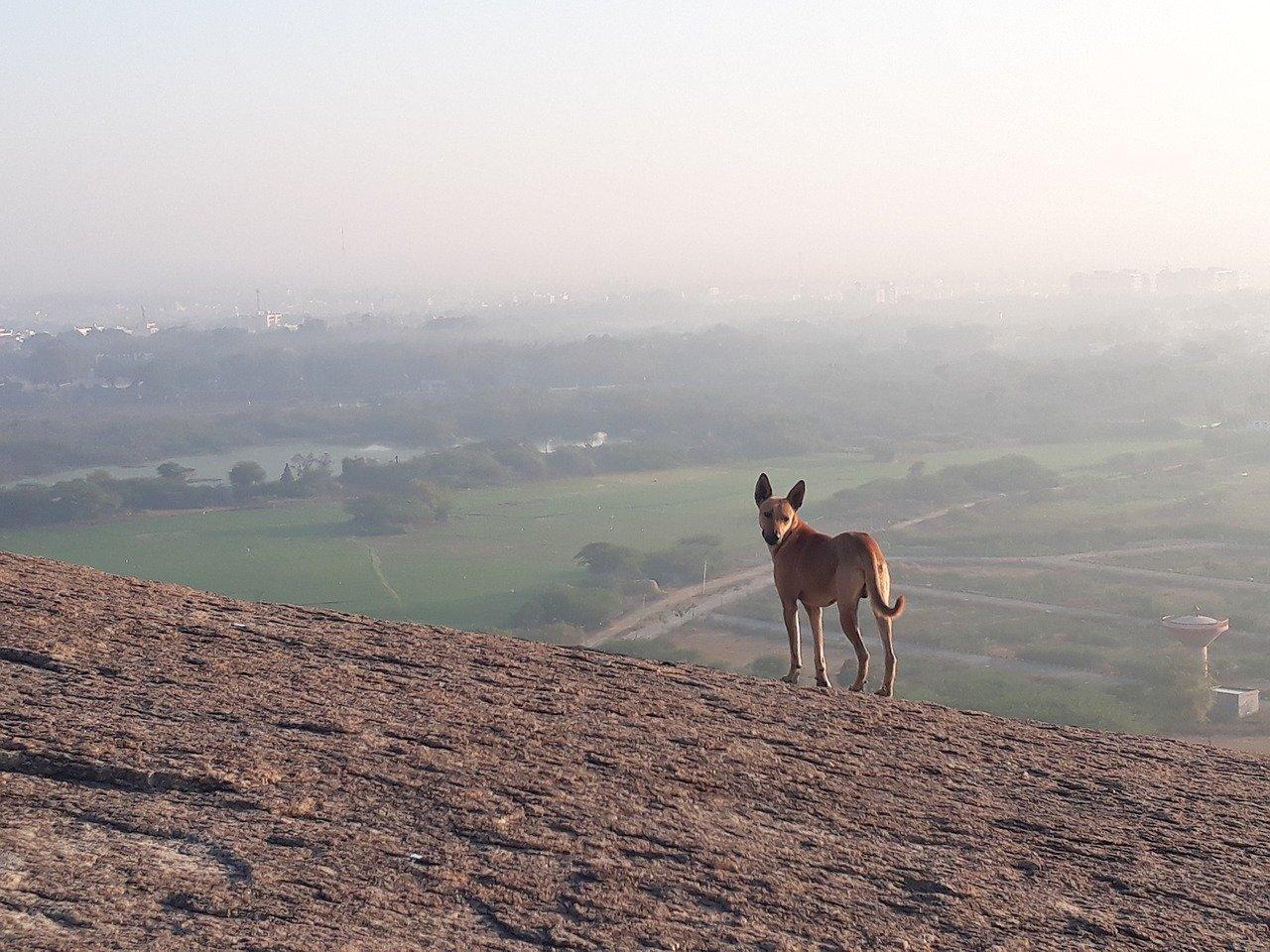 cane sulle colline