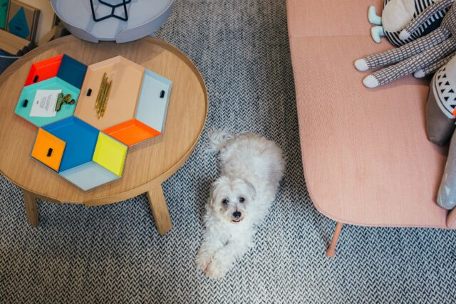 cane seduto per terra
