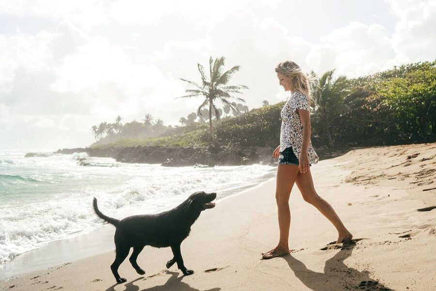 cane nero sulla spiaggia