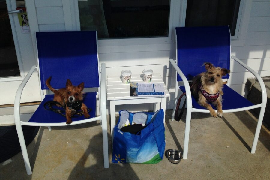 cagnolini in vacanza