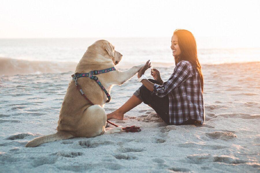 cane gioca con la sua padrona