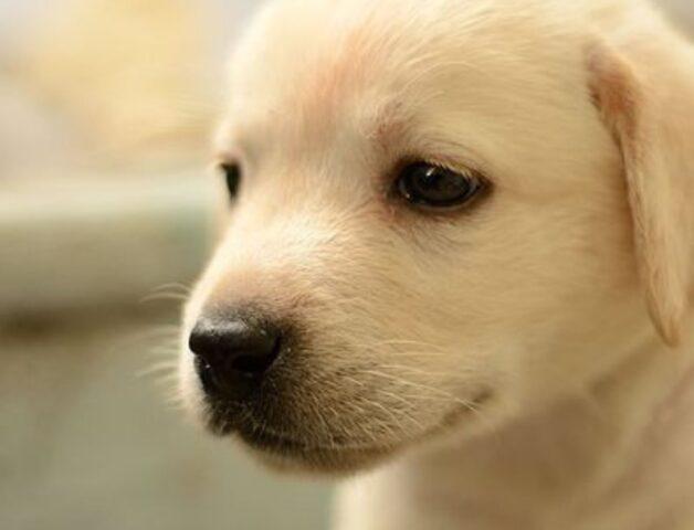 dolce cucciolotto che osserva