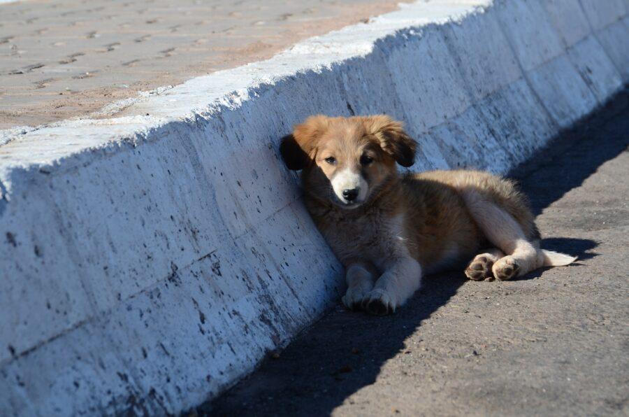 cucciolo di cane lungo la strada