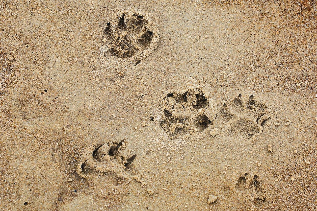 impronte del cane sulla sabbia