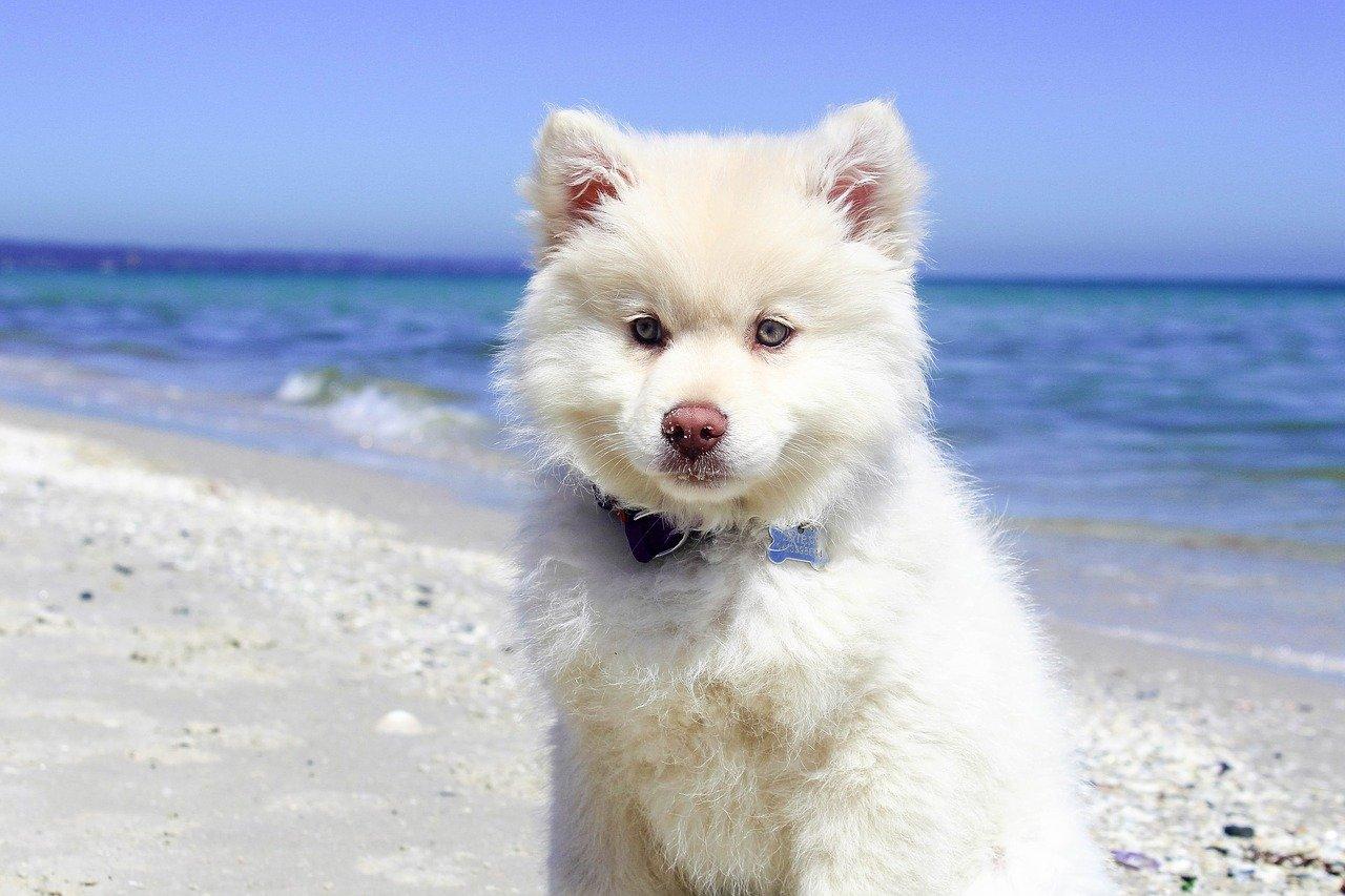cane si rilassa al mare