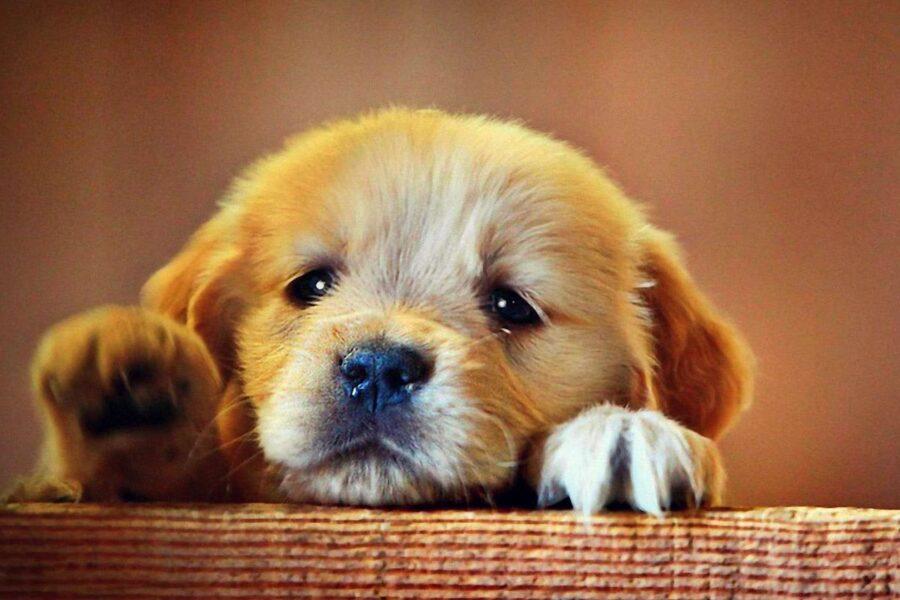 cucciolo di cane triste