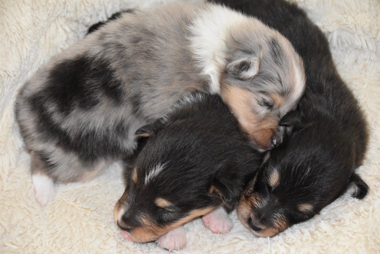 cuccioli cane dormono accoccolati