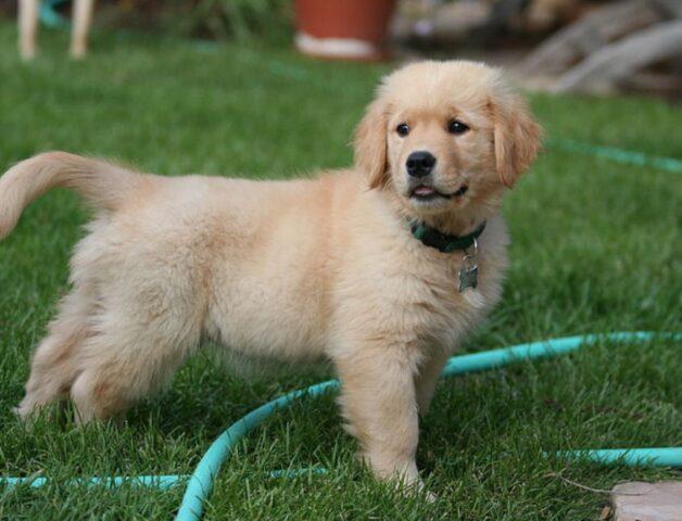 cagnolino in giardino