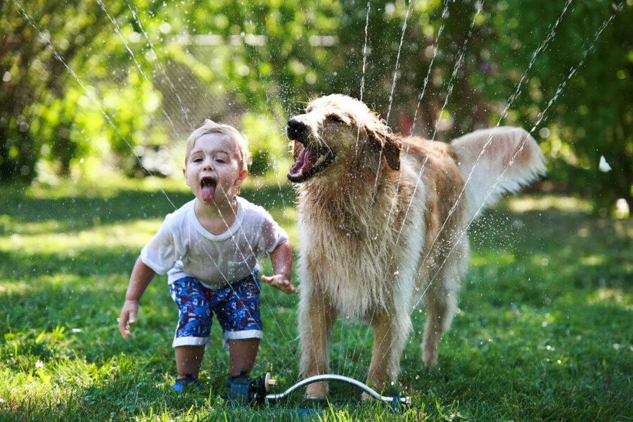 cane e bimbo giocano con l'acqua
